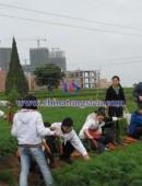 2012年中钨在线拔萝卜活动-0004