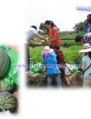 2012年中钨在线摘西瓜活动-0009