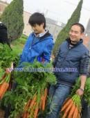 2012年中钨在线拔萝卜活动-0002