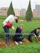 2012年中钨在线拔萝卜活动-0003