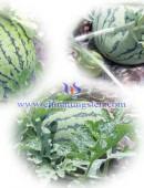 2012年中钨在线摘西瓜活动-0006